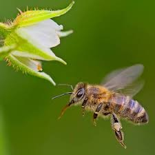 Why Bees Matter? - Highlighting the Importance of Pollinators