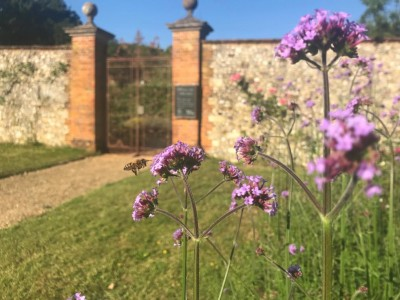 Celebrate World Bee Day in Chawton House