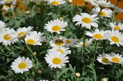 Slavnostna seja ob 3. praznovanju Svetovnega dne čebel