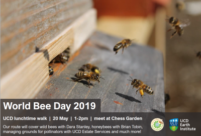 World Bee Day lunchtime walk