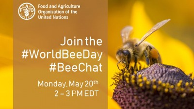 Join the World Bee Day Twitter #BeeChat